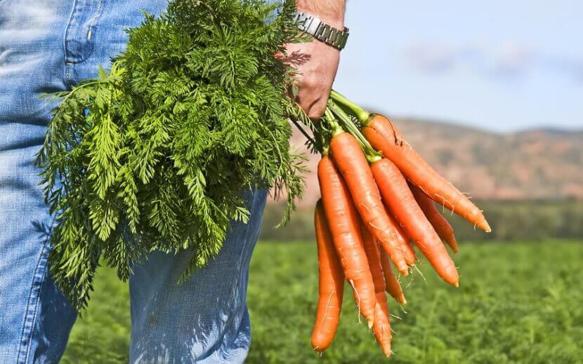 Морковь и потенция мужчин