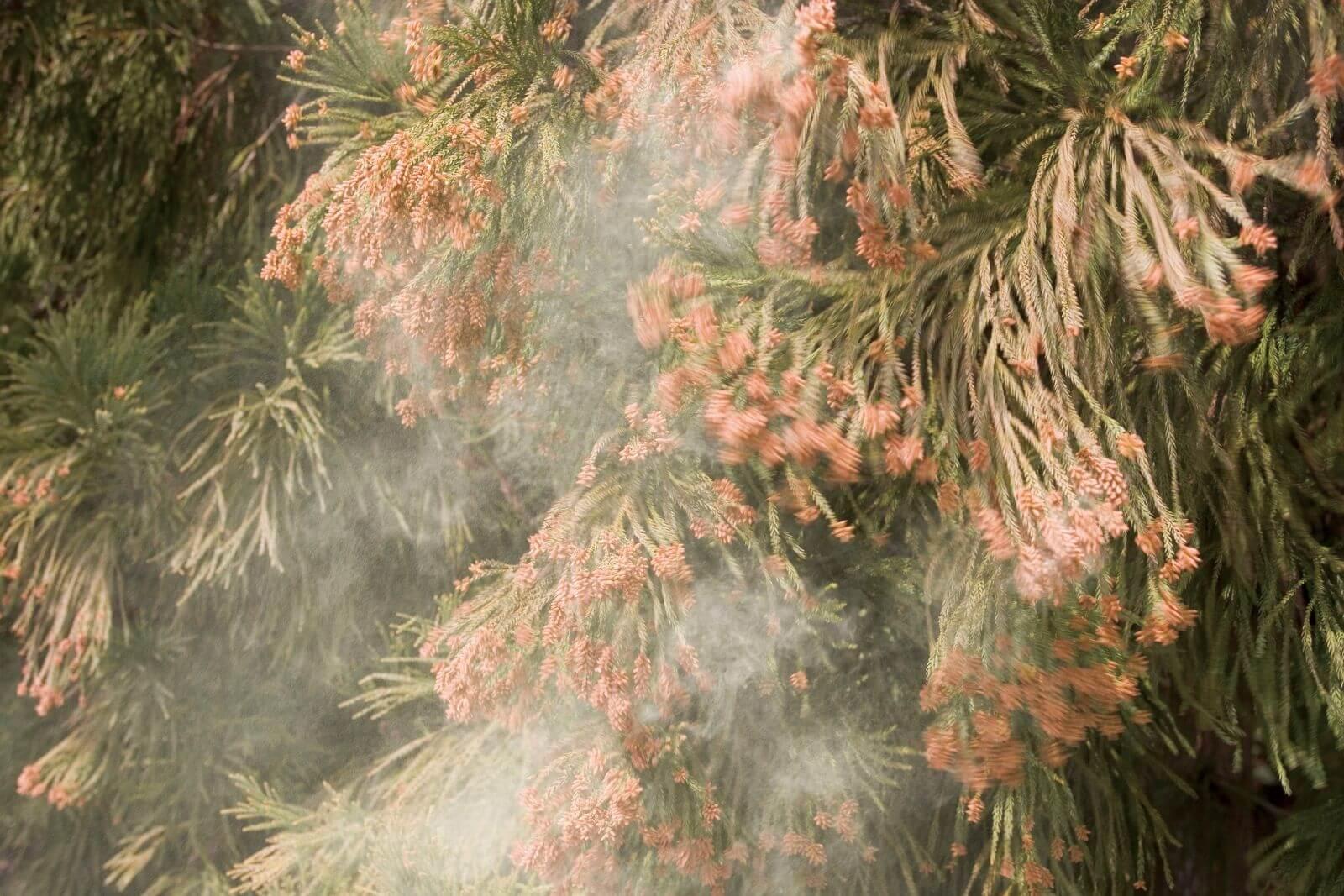 Причины алергии